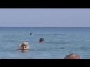Крымские дельфины играют с людьми в море