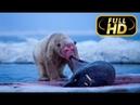 СУПЕР УБИЙЦЫ ПОЛЯРНЫЙ МЕДВЕДЬ FULL HD Документальный фильм на Amazing Animals TV