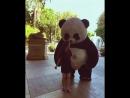 танцор панда 🐼