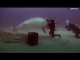 Дайвер — гипнотизер акул