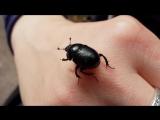 Спасение жука