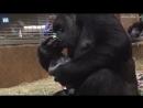 Это трогательное видео было снято в Смитсоновском национальном зоологическом парке в Вашин.mp4