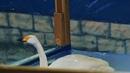 Центральный парк / Ставрополь 2019 / 4К Видео / Panasonic Lumix DMC-FZ1000