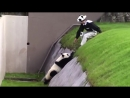 Панда проказничает