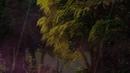 Летом в загадочном лесу, сцена 1. Анимированный футаж для видеомонтажа.