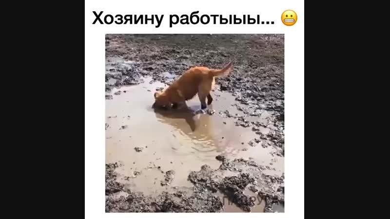 О Боже 😂😱 Главное успеть помыть грязнулю, пока грязь не засохла!