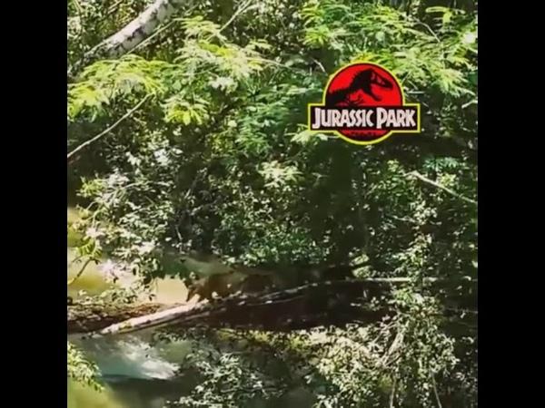 Dinosaurs do exist