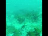 Прогулки с аквалангом 4