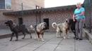 Щенки кавказская овчарка, продаются.. www.r- 79262205603 Татьяна Ягодкина