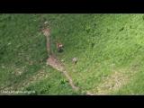 В Кавказском заповеднике олениха гналась за волком, напавшим на ее детенышей.
