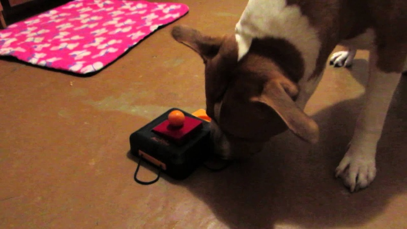 Thor plays with Gamble Box Trixie 28 12 2014