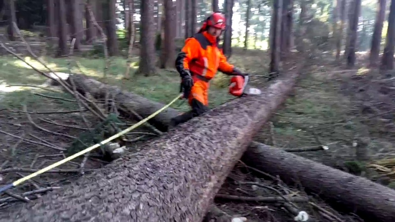 Husqvarna 572XP Complete felling and tree processing PROFESSIONAL FELLING
