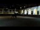 Танго с лошадью.mp4