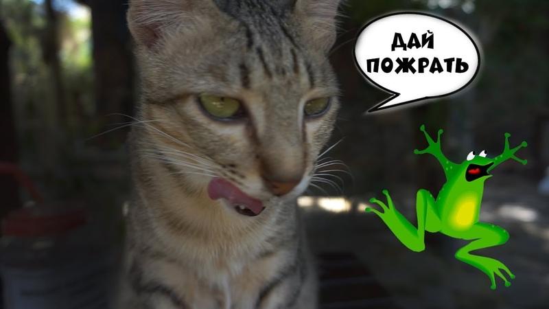 Без путЁвки ✈️ 40 котов и жареная жаба 🐸 Вьетнам, Хой Ан