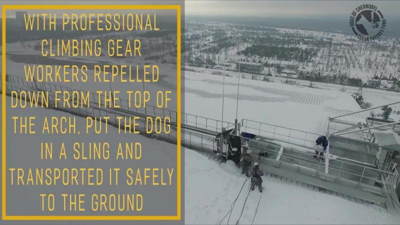 Спасение собаки в Чернобыле
