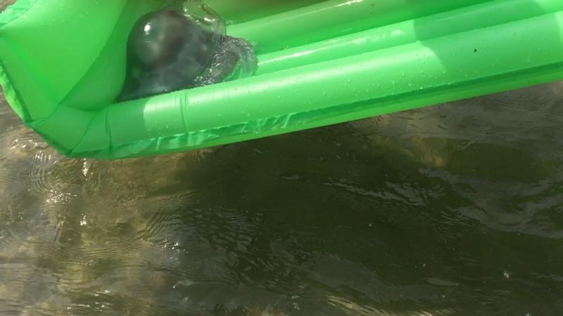 Актракцион для медузы