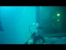 Дайвинг с дельфинами июль 2