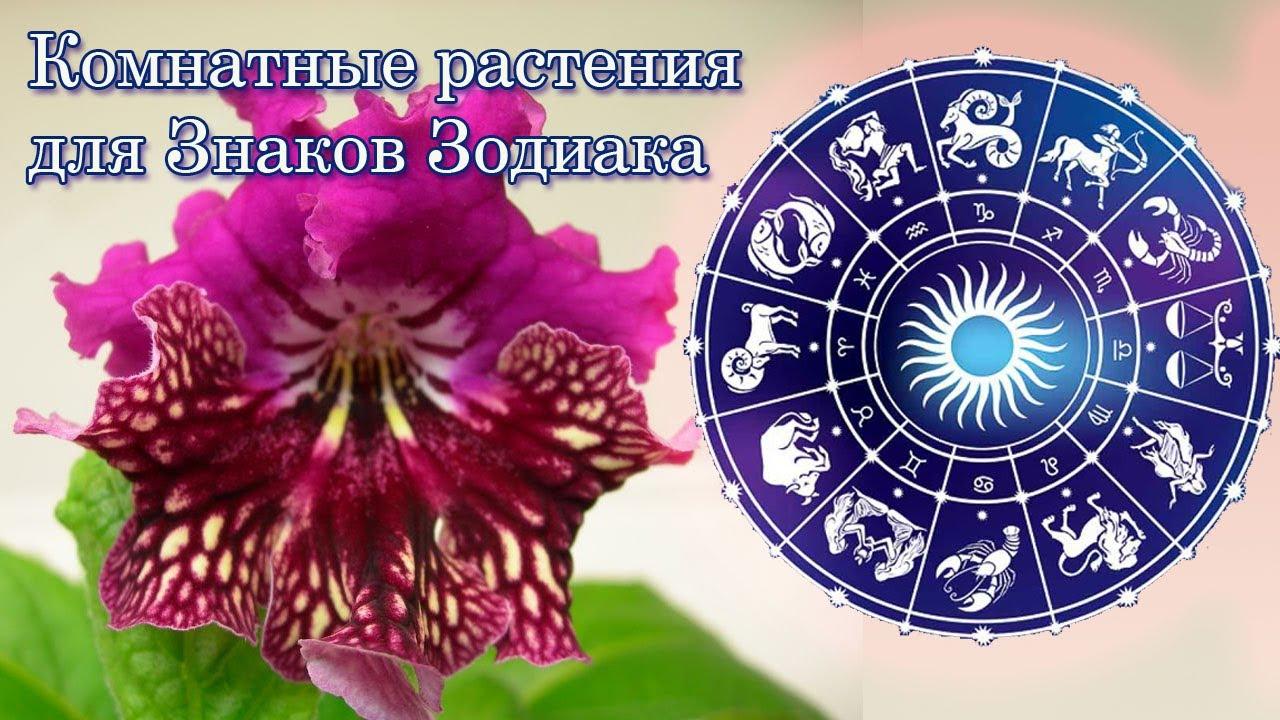 Орхидея Уход Каким Знаком Зодиака Он Подходит