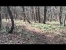 2018.03 Ялта, подснежники, гора Ай-Петри, смотровая Серебряная беседка