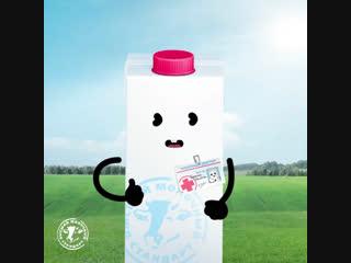 Say yes milk