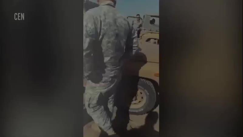 Такса выпала из самолета шесть дней скиталась по пустыне и выжила