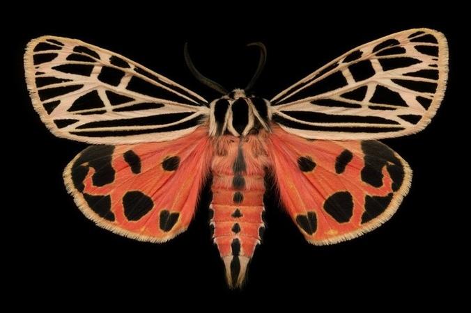AUTOGEN DJ - Moth