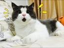 самые смешные приколы про котов новые №207