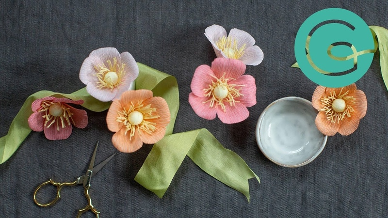 How to Make a Wild Rose Bloom English Garden Pack Starter Flower