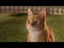 Psy i koty [2001] cały film PL