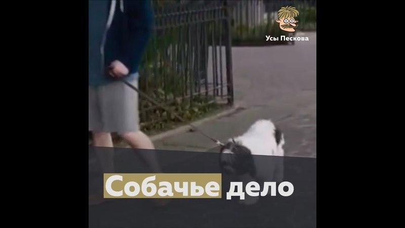 Собачье дело (собачьи экскременты)