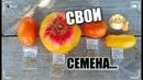ТОМАТ—получение семян/ Кто о чём , а я о помидорах/ томаты семена огород