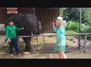 Маленький слонёнок!!🐘🐘😂