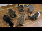 Обед в кошачьем общежитии
