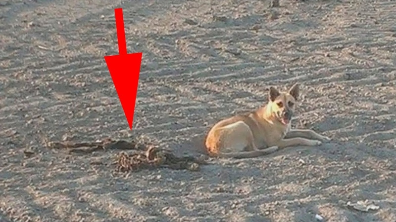 Когда люди увидели, что охранял пёс , не смогли сдержать слёз…