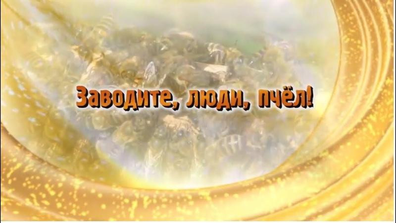 Фильм Павла Кашина Заводите, люди, пчёл!