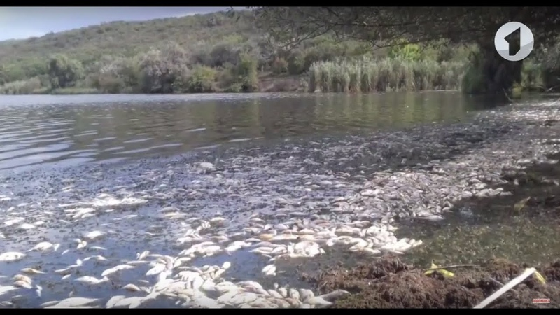 Травля рыбы в Дубоссарском районе