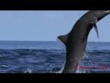 Все дельфины в ураган . Какие же они красивые