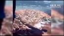 Сахалинцы сачками вычерпывают тонны селедки на берегу Холмского района