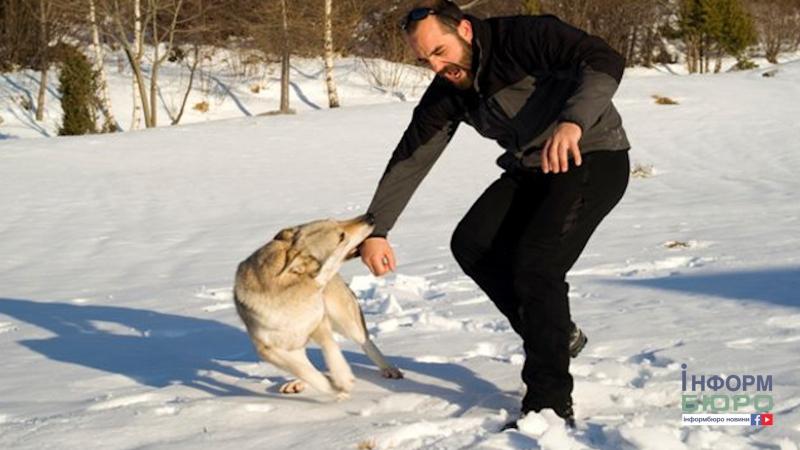 Жертви бродячих собак. Як уникнути нападу