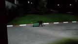 Осторожнее проживающие в Горки Городе 960 м. Возле отелей ночью медведь роется в мусорных контейнерах!