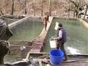 Рыбная ферма в Алании Разведение форели