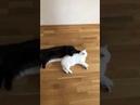 3417). 13.05.2018 - Кошка Латина уехала домой! (видео из дома)