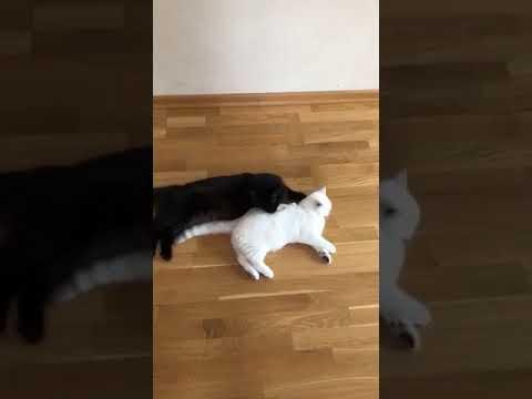 3417 13 05 2018 Кошка Латина уехала домой видео из дома