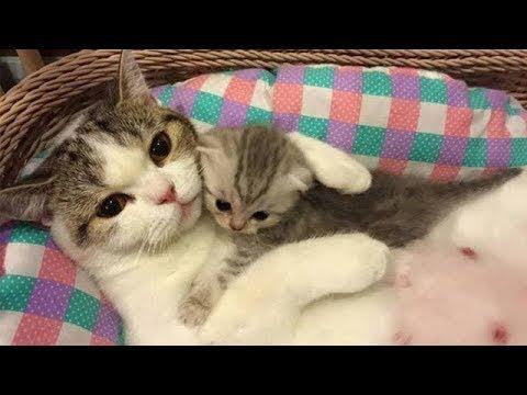 어미 고양이가 새끼와 놀아주는 방법 ㅋㅋㅋㅋㅋ 웃음참기 2018