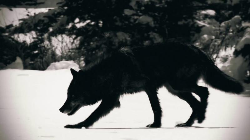 C-LEKKTOR - Animals (Official Music Video)