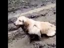 пёс в грязи