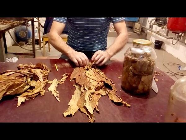 Ферментация табака Litte Dutch