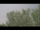весенний дождь корешки вершьки