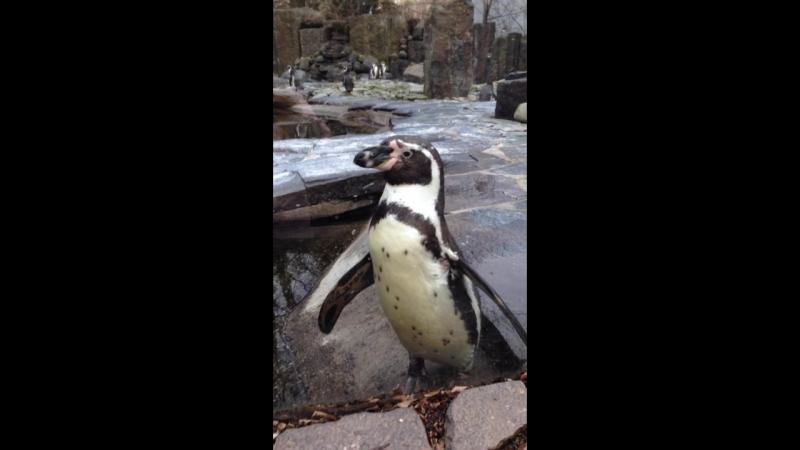 Prague Zoo - Penguin
