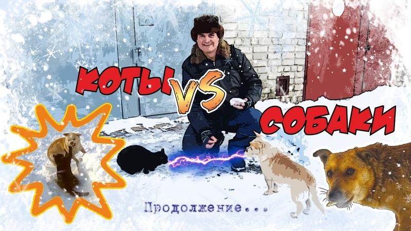 Коты vs Собаки Из жизни Медведьевича